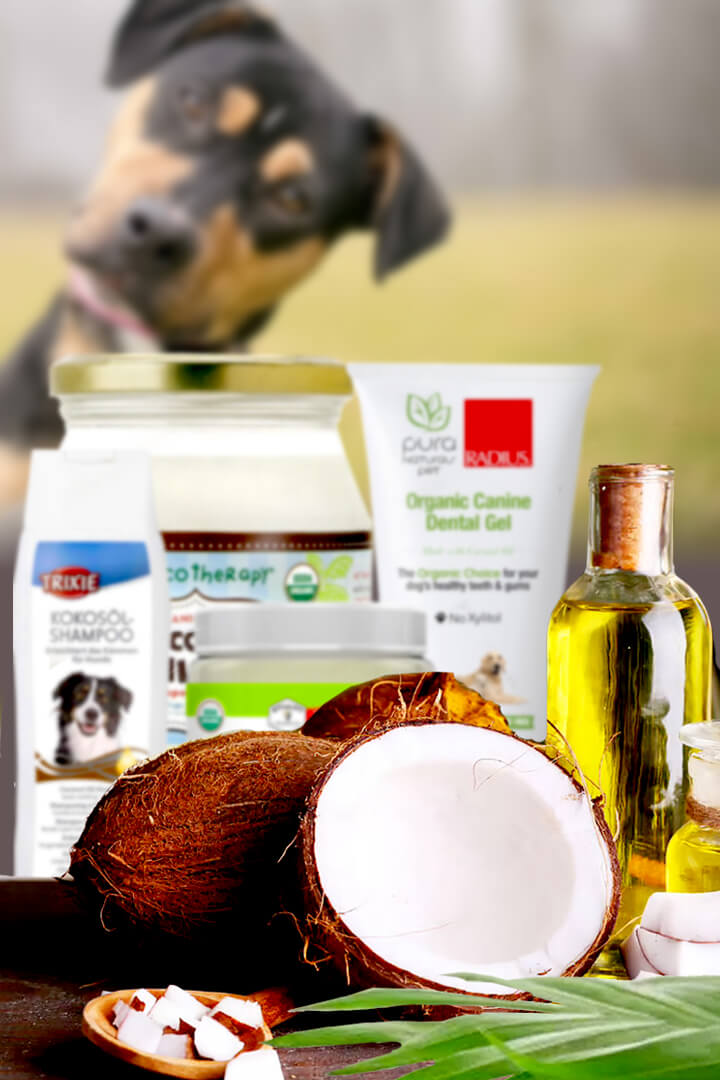 coconut oil benefits for dogs ears, skin and teeth