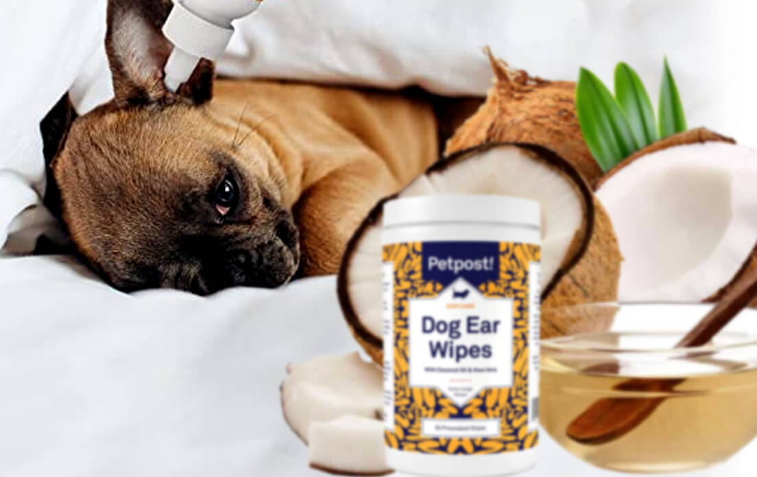 coconut oil benefits for dogs ears, skin