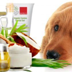 coconut oil benefits for dogs