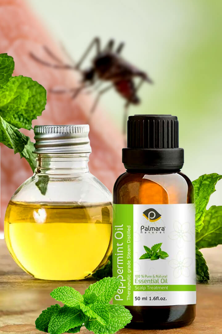 peppermint oil benefits for bugs
