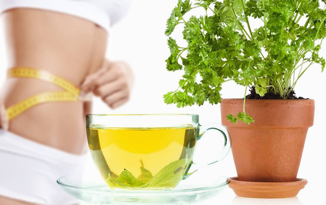 parsley tea benefits weight loss