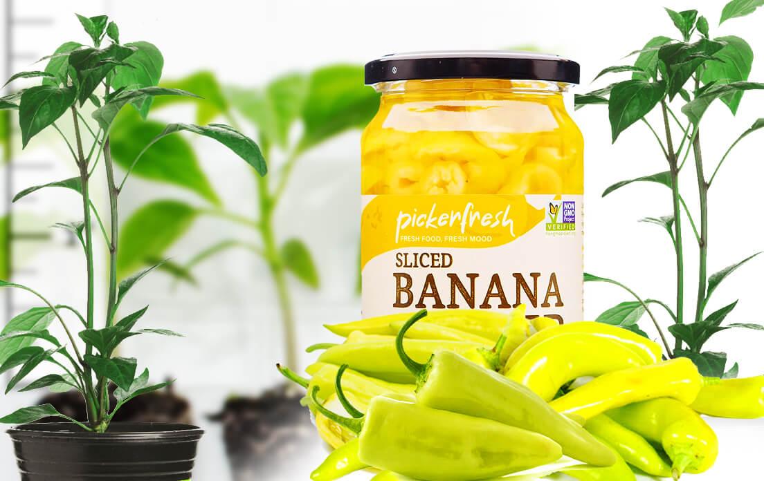 Banana Peppers planting pot