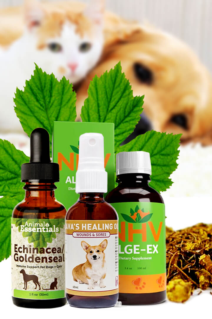 Goldenseal Benefits For Cats and For Dogs