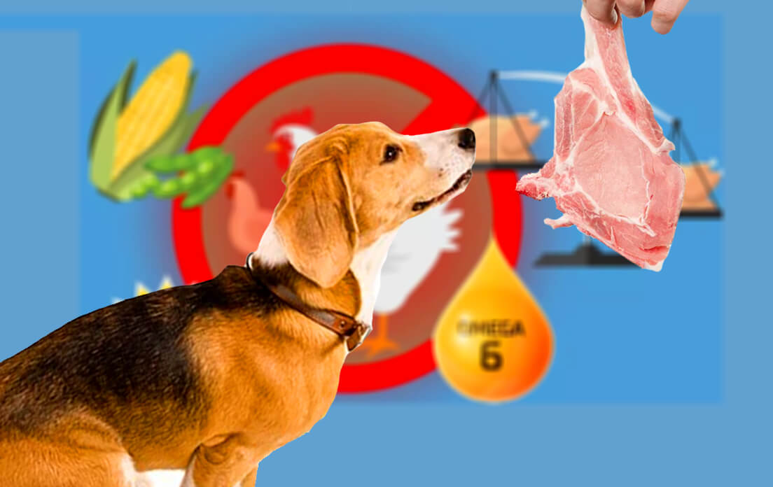 Is Raw Chicken Good For Dogs Before Doing So You Must Know The Facts!