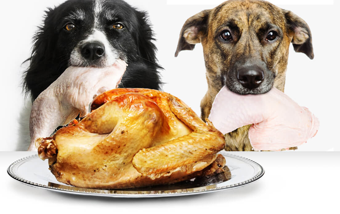 Is Raw Chicken Good For Dogs