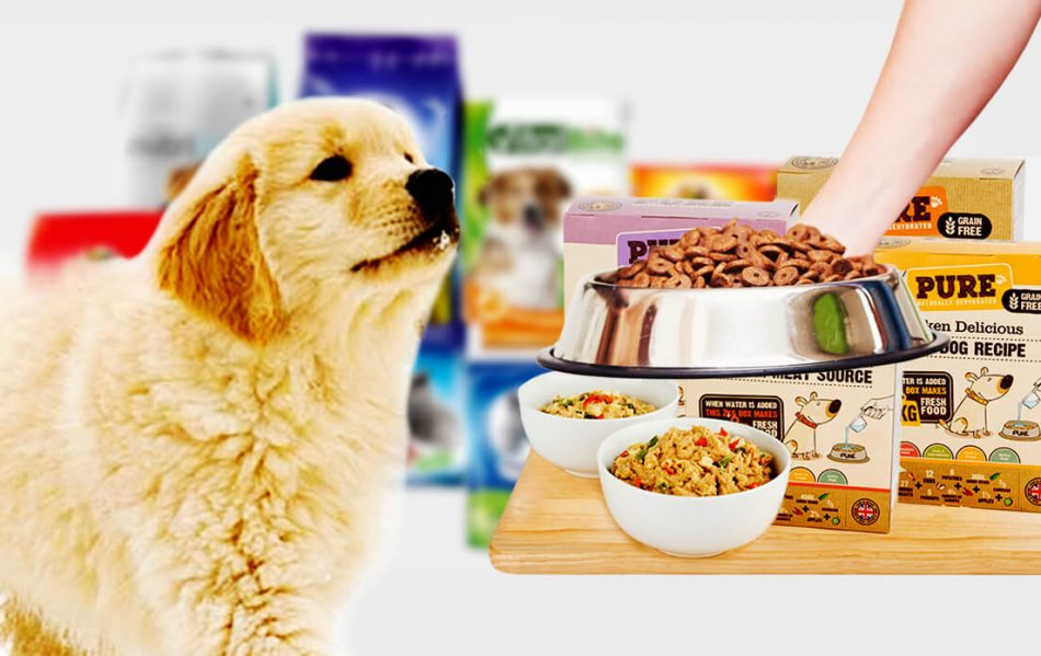 What Can I Feed My Dog Instead of Dog Food Look for Alternatives