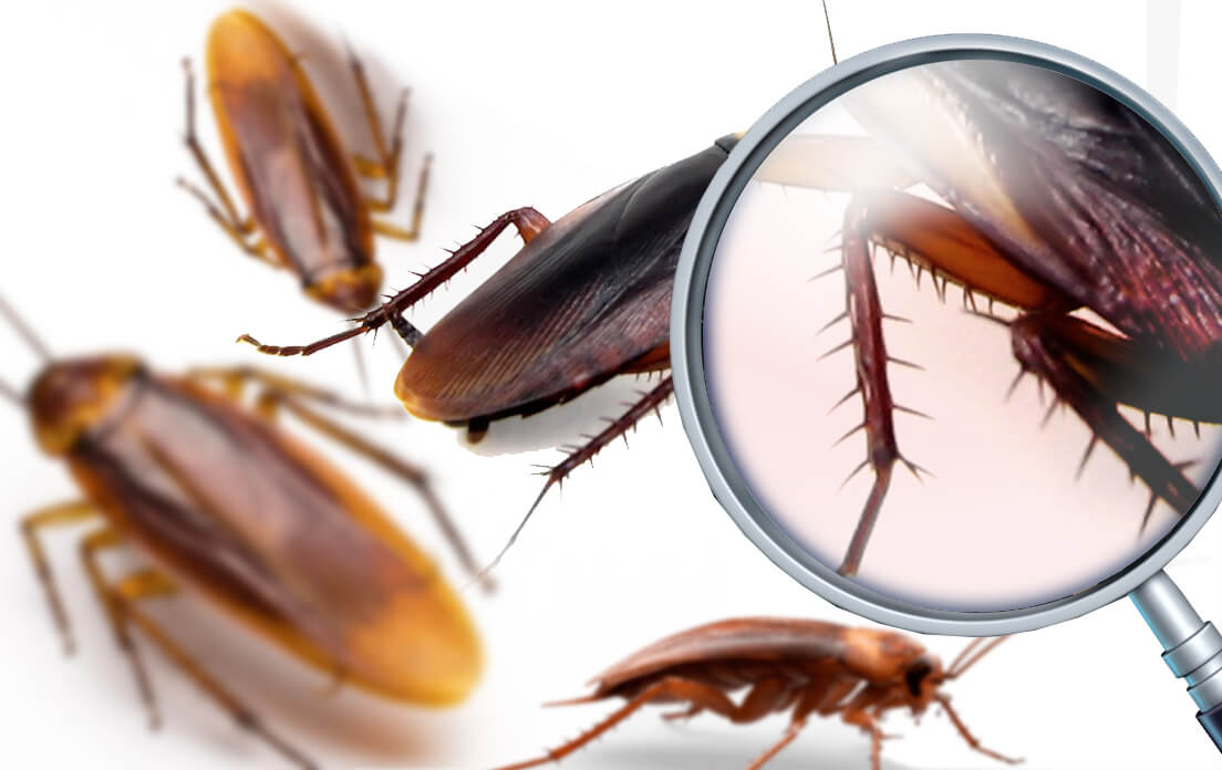 Oh, my God!! I don't believe it! what does a cockroach look like