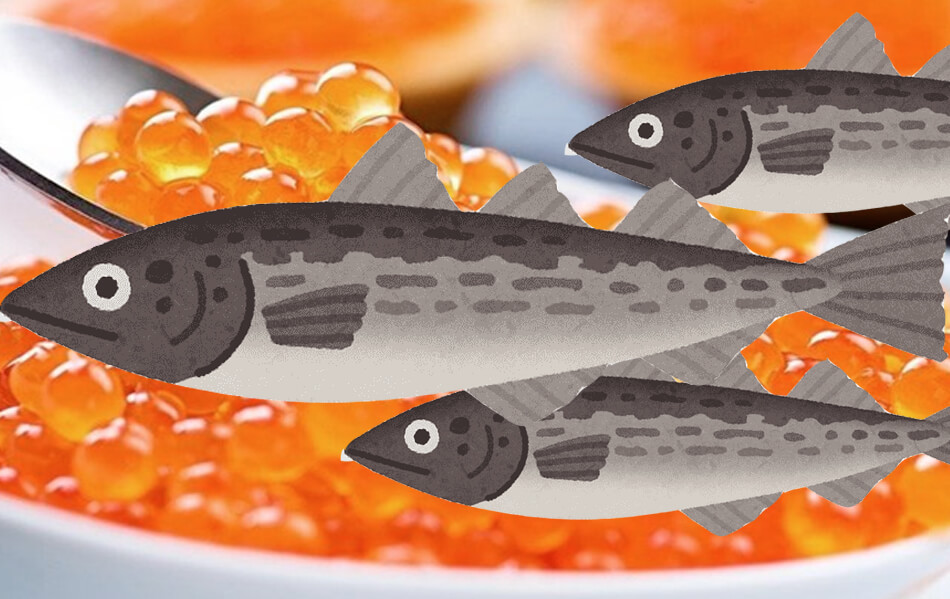 what is tobiko or flying fish roe, how many colors does he have