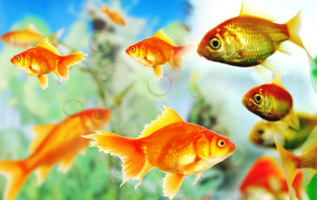Do fish drink water - in what ways do fish drink?