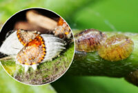 How Fast Can A Scale Insect Run And What Insects Are The Fastest