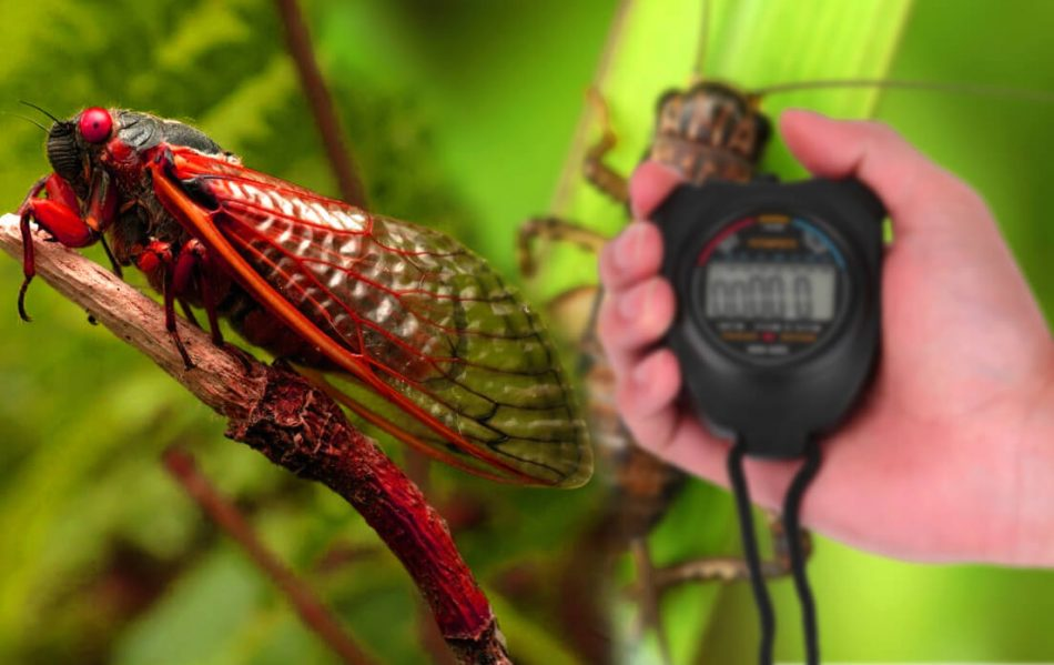 How Fast Can a Cicada Run Maybe The Flash Will Lose