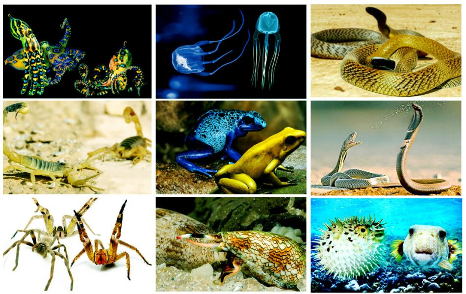 how fast can a common names of poisonous animals run
