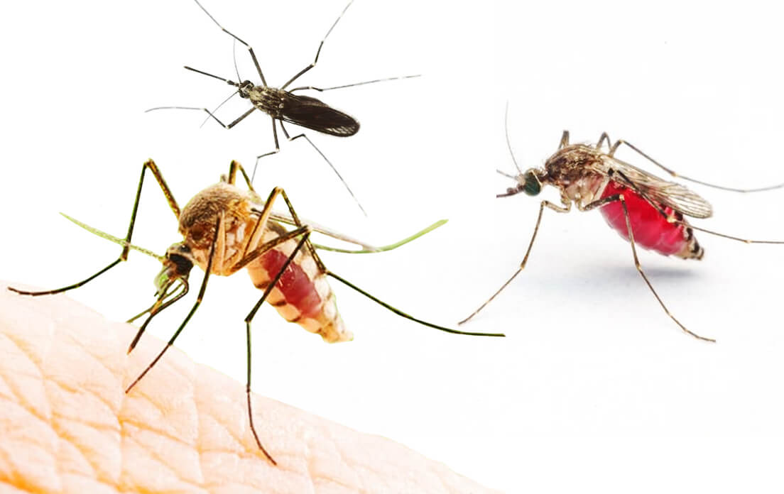 how fast can a mosquito run and flap its wings