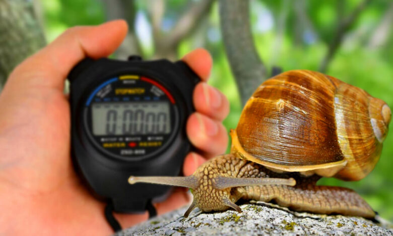 How Fast can a Mollusk Run Characteristics and Types