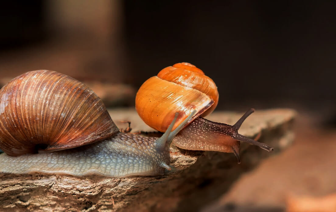 How Fast can a Mollusk Run Characteristics and Types2