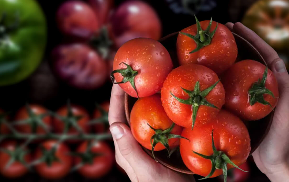 Tomato is a fruit or veg
