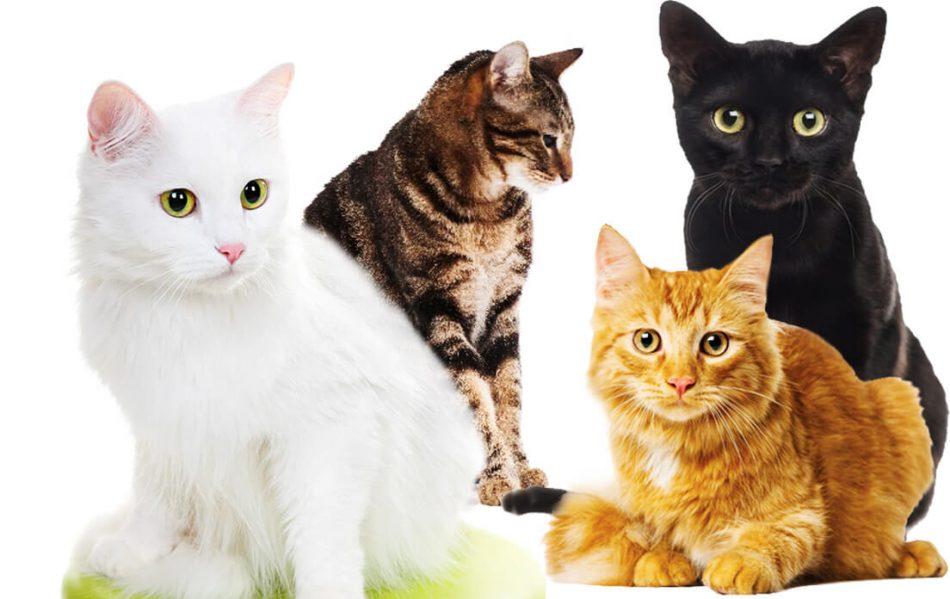 unique kitten names by color