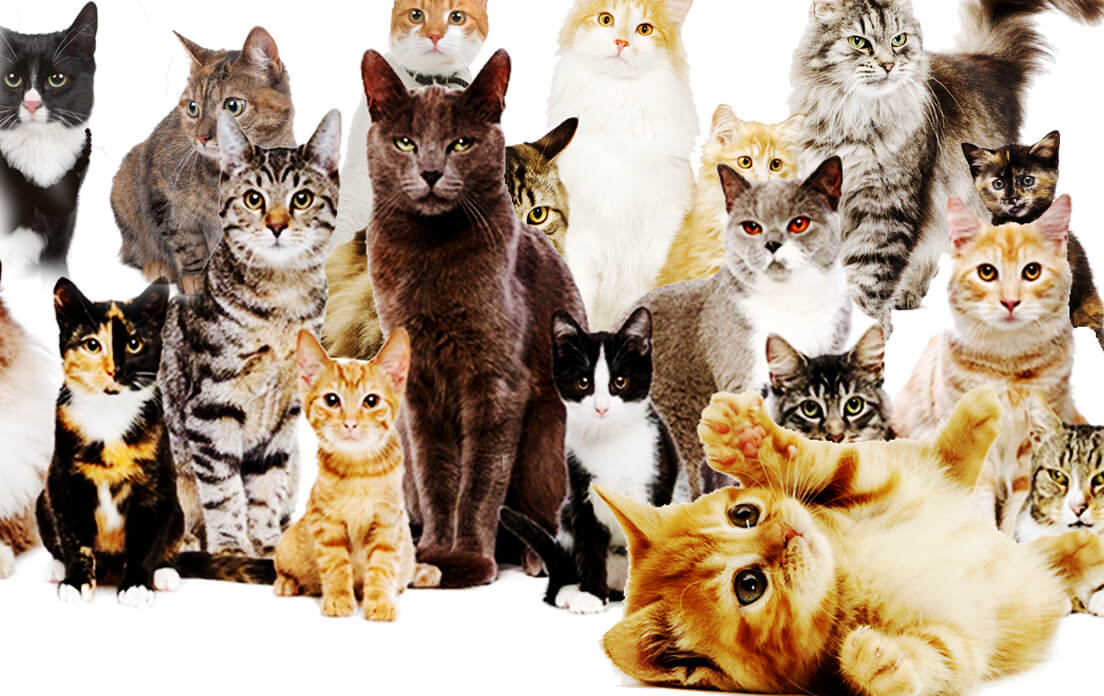 Unique Kitten Names By Color: Best evergreen