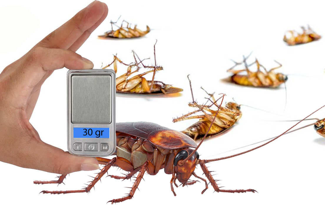Weight Of Average Cockroach