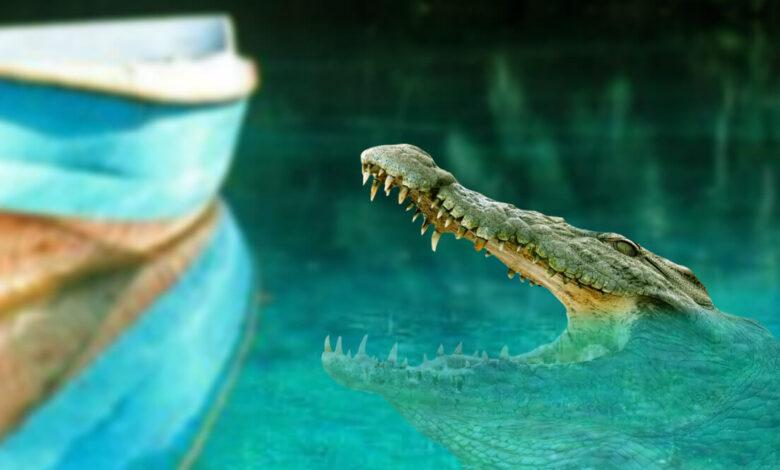 weight of average crocodile