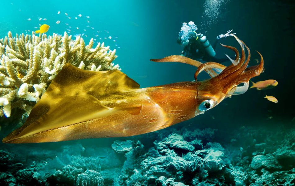 Weight of Average Giant Squid Do You Know How Much
