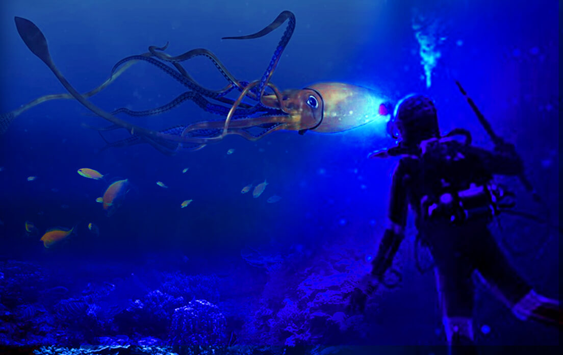 Weight of Average Giant Squid