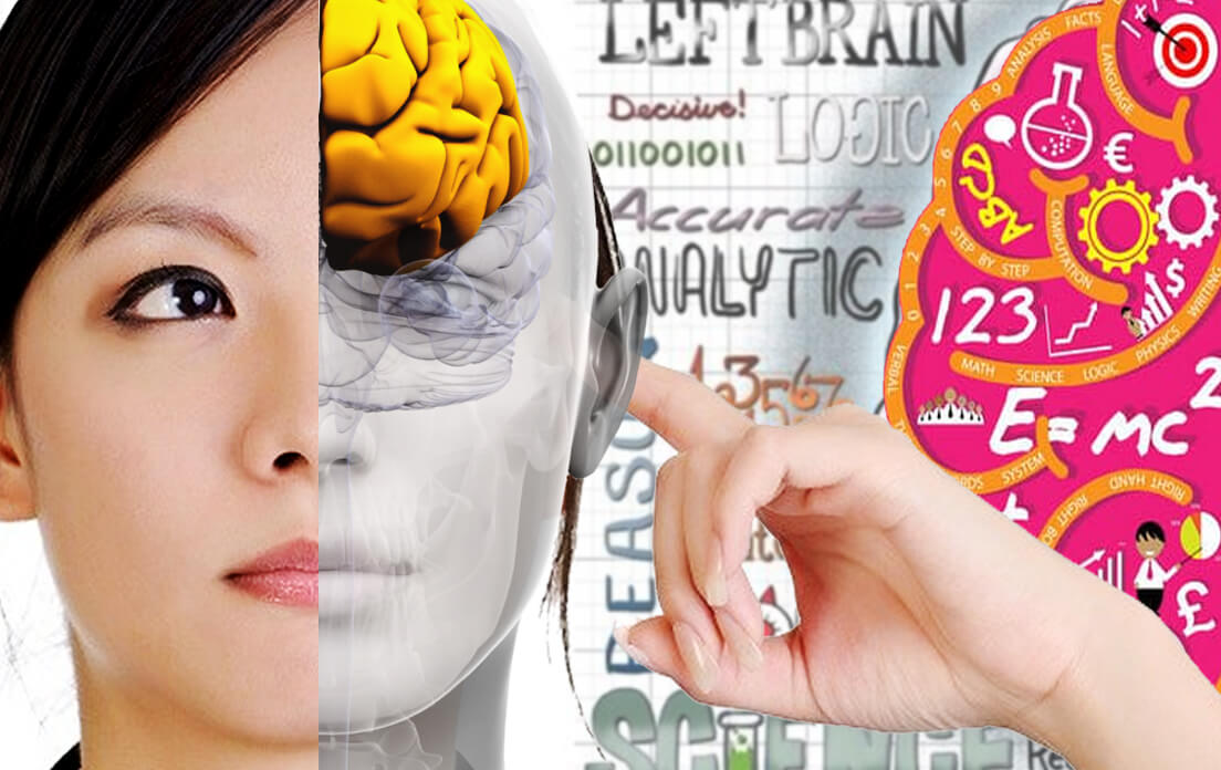 What Does The Left Side of The Brain Control and Understanding The Impact of Brain Injury