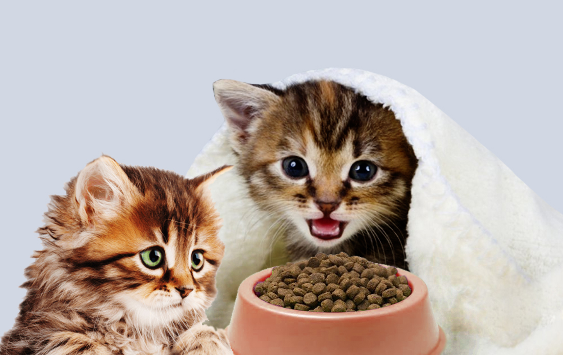 cat sneezing frequently: home remedy for cats sneezing