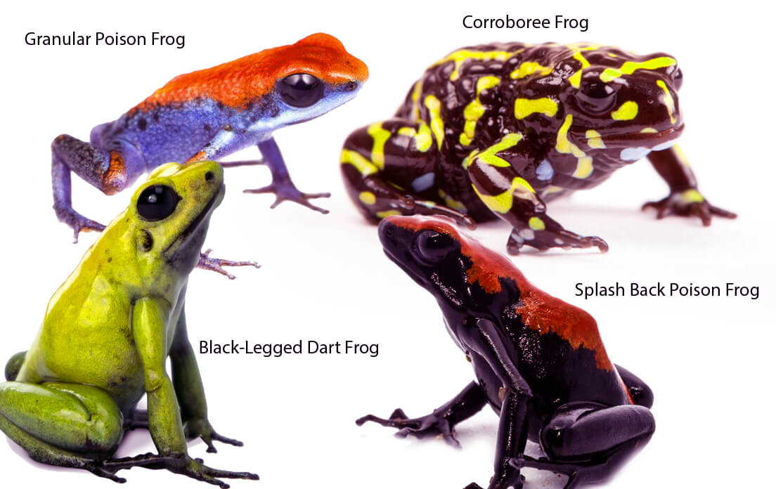 How Fast Can a Frog Run and Swim