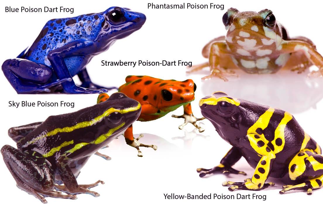 Frog Run and Swim