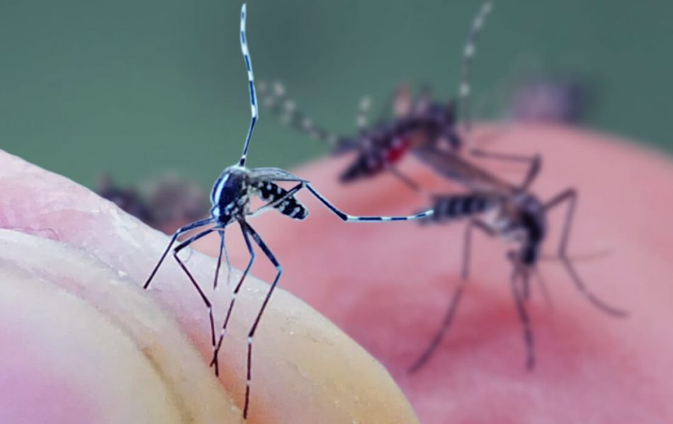 weight of average mosquito