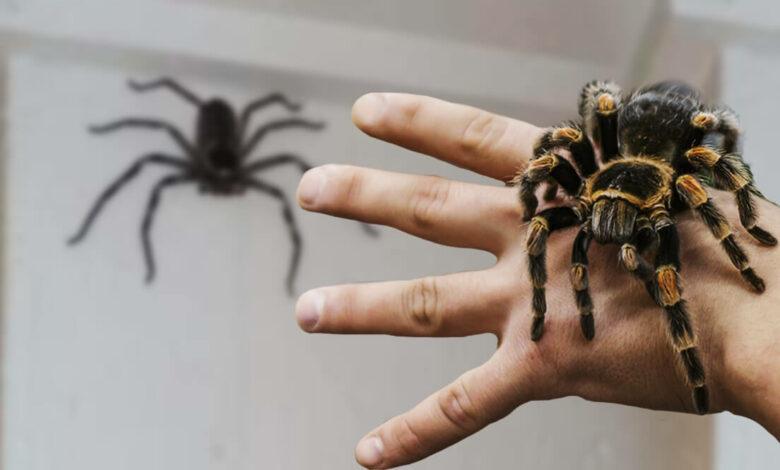 weight of average spider