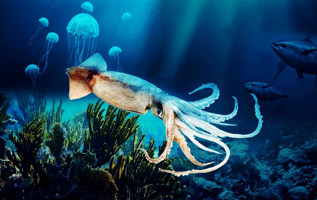 weight of average squid