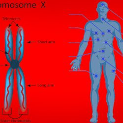 how many chromosomes do humans have