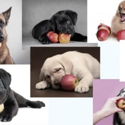 are apple seeds poisonous to dogs