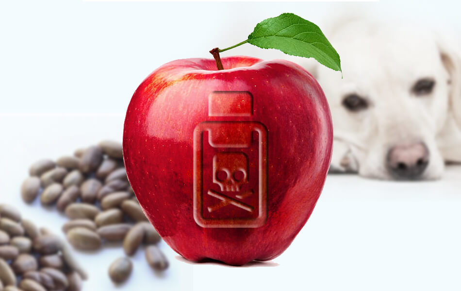 Are Apple Seeds Poisonous To Dogs: Benefits and Side Effects and How To Cure If Poisoned