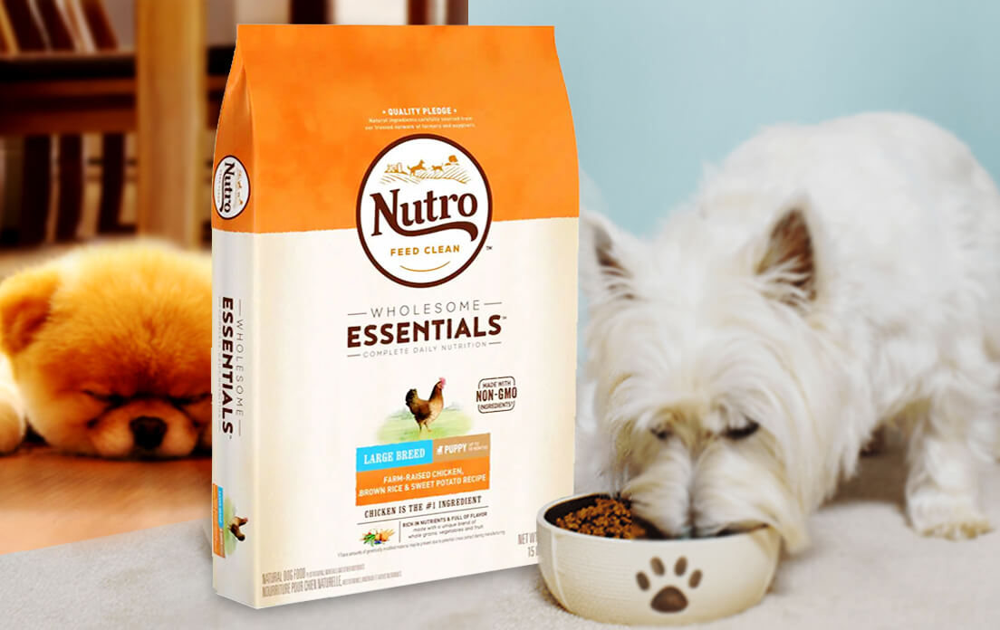 dog food for small dogs: Recommended Brand and Price