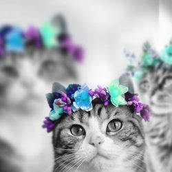 Flowers not poisonous to cats