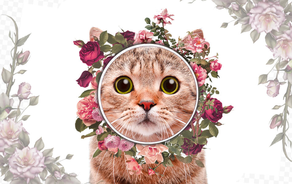 Flowers Not Poisonous To Cats: Cats Really Like It and There Are Some That Have Benefits