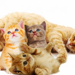 how long does cats stay pregnant