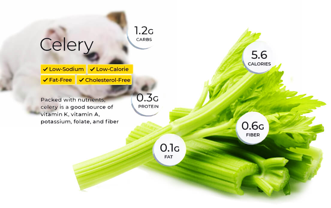 Can Dogs Eat Celery: Side Effects and Benefits
