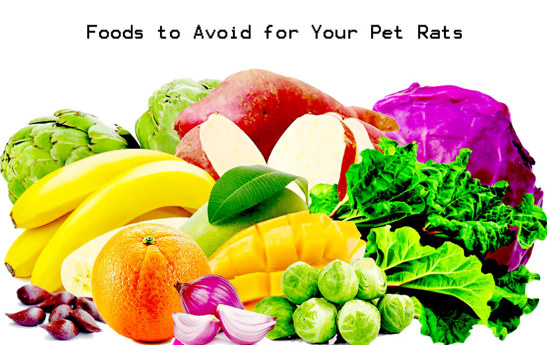 Can Rats Have Celery: 9 Safe Foods For Rats and 9 to Avoid