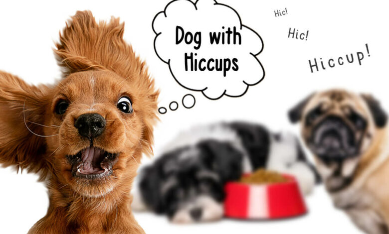 dog with hiccups