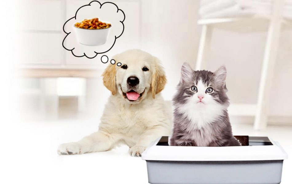 why do dogs eat cat poop