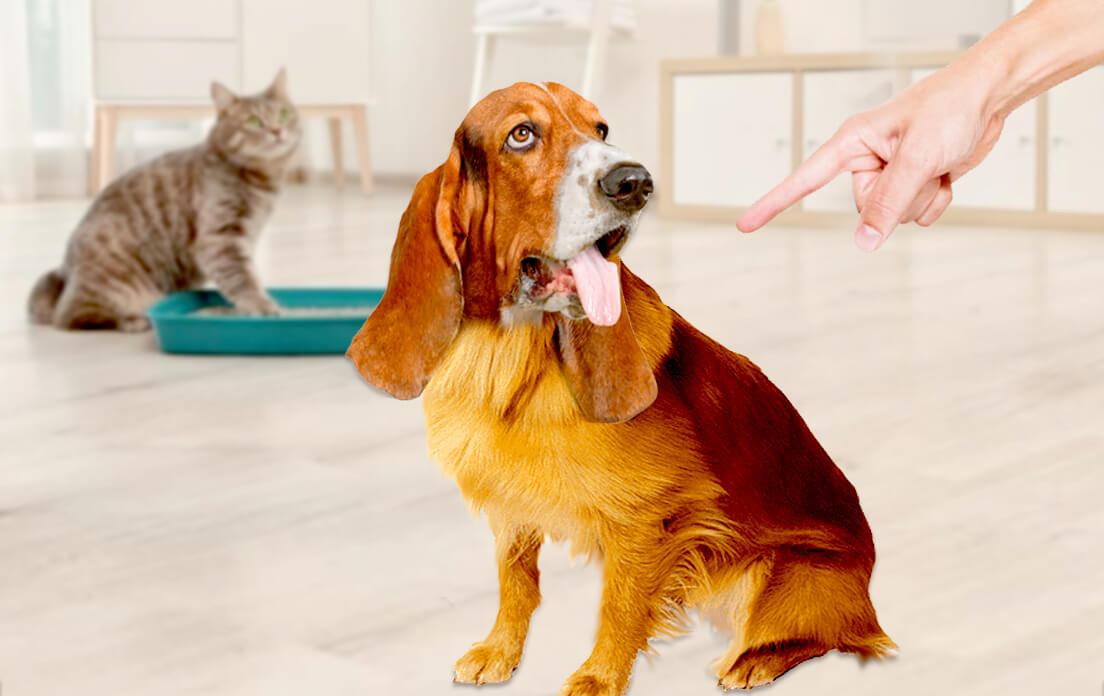 Why Do Dogs Eat Cat Poop: Animals Care