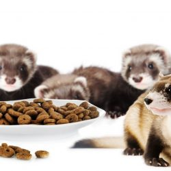 what is a baby ferret called