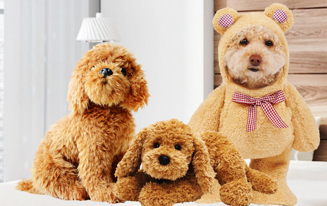 what is a teddy bear dog